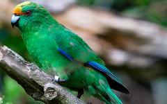 Bird Watchers Tour