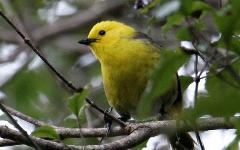 All Day Birdwatchers Experience to Blumine and Motuara Islands