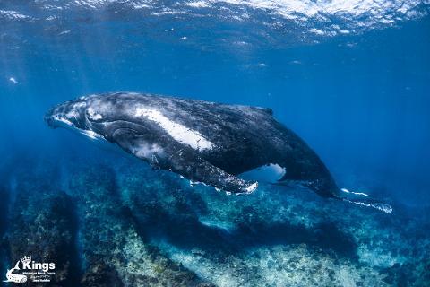 2021 Whale Shark/Humpback/Eco Sea Life Tour (AUG-SEPT)