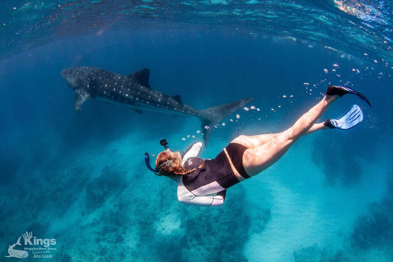 Gift Voucher - Whale shark Snorkel Adventure