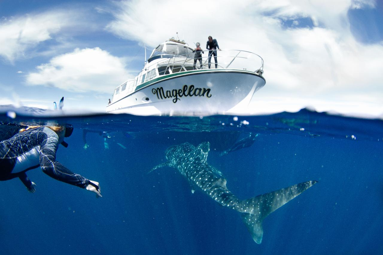 2022 Whale Shark Snorkelling Adventure Tour (APR-JUL)