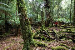 Tarkine Wilderness 3 Day Walk