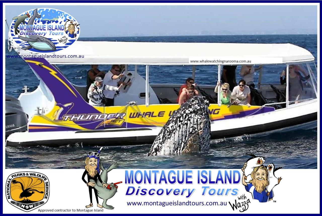 MONTAGUE ISLAND NPWS Guided Little PENGUIN Sunset Discovery Tour, Coastal Cruise & ECO 1 Seals Cruise