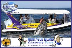 MONTAGUE ISLAND NPWS Guided Little PENGUIN Sunset Discovery Tour, Whale Watch & ECO 1 Seals Cruise