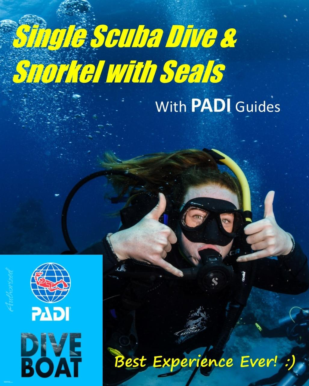Guided Single Scuba Dive & Snorkel with Seals Adventure Combo BEST EXPERIENCE EVER!
