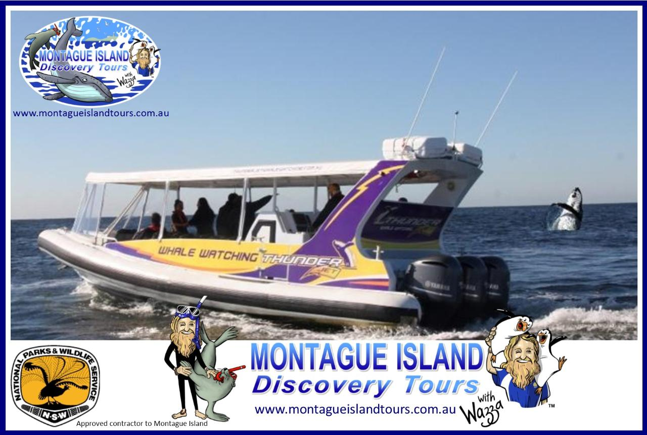 MONTAGUE ISLAND NPWS Guided Discovery Tour Seals & Whale Watching 11.45am