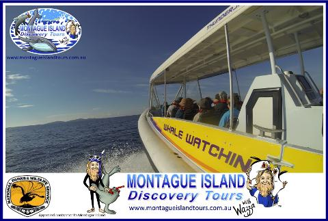 Snorkelling with Seals & Whale Watching Adventure Combo, Discover your Wildside!