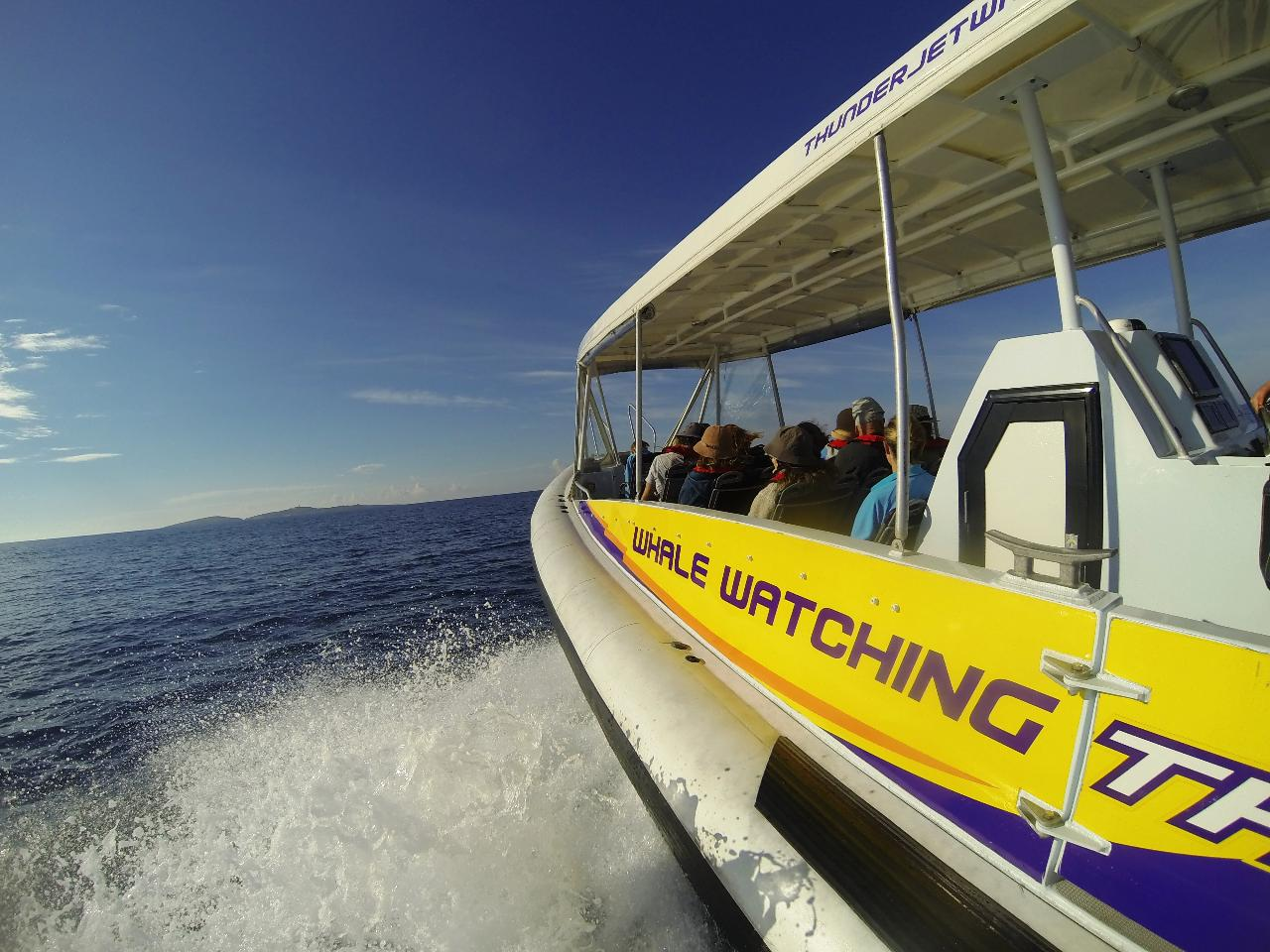 Eco 1 EXTREME Montague Island Ocean Wildlife Seal Safari  **MOST POPULAR TOUR**