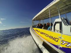 Eco 1 EXTREME Montague Island Ocean Wildlife Seal Safari  **MOST POPULAR TOUR**