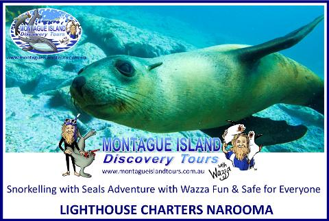 Snorkelling with Seals & ECO 1 Adventure, Discover your Wildside! (Wetsuits & Snorkelling gear included FREE)