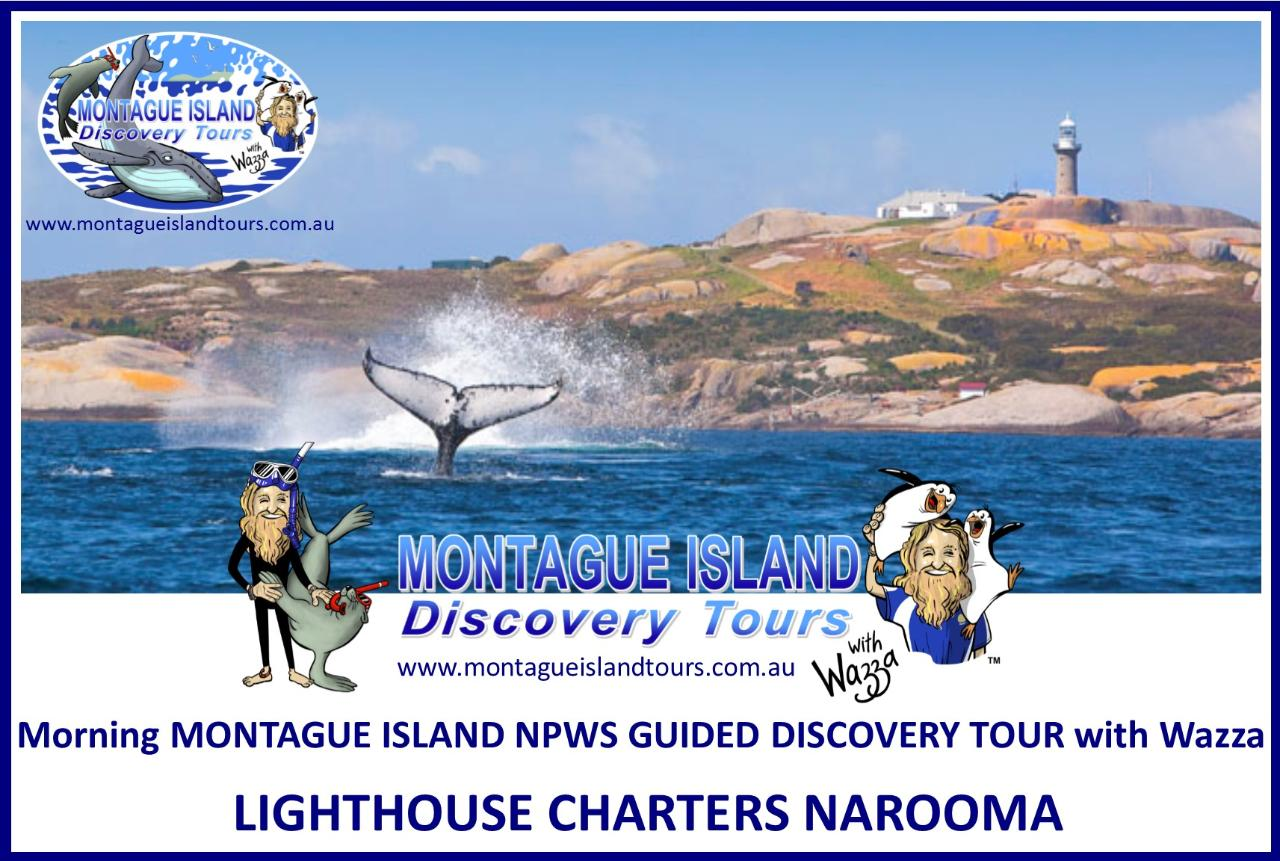 Morning MONTAGUE ISLAND NPWS Guided Discovery Tour Seals & Whale Watching Sept & Oct  8.00am