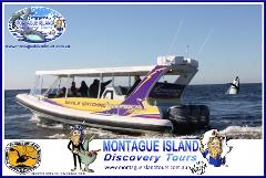 Whale Watching Adventure & Eco Seal Cruise,Discover your Wildside!10.30am or 1.00pm