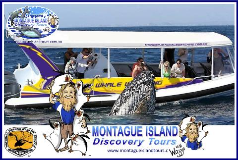 MONTAGUE ISLAND NPWS Guided Little PENGUIN Sunset Discovery Tour Seals & WHALE WATCHING  Sept to Nov