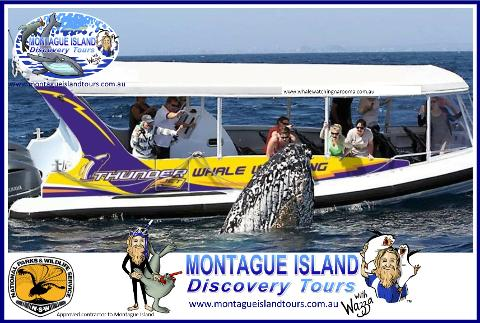 Whale Watching Adventure & Eco 1 Seals Cruise, 8.00am Whale Guarantee Best time of the Day!