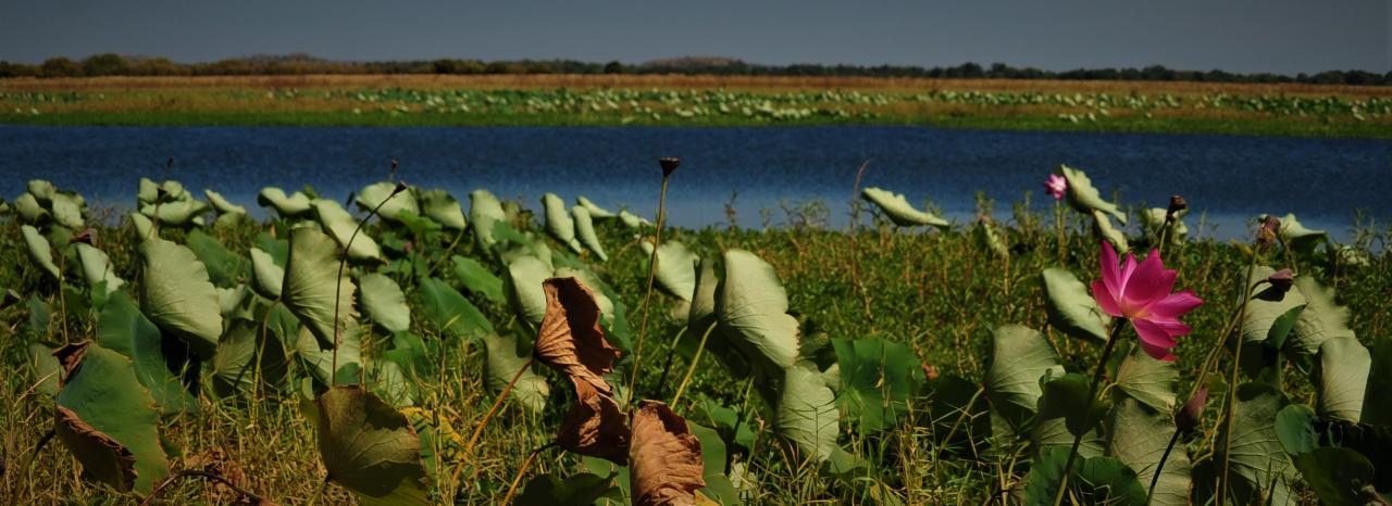 Mikinj Valley (Red Lily) Arnhem Land Sightseeing Day Tour (ex Darwin)