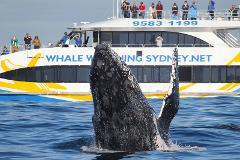 3hr Discovery Cruise + COMBO - Departing Darling Harbour