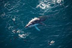Whale Watch Ocean Safari