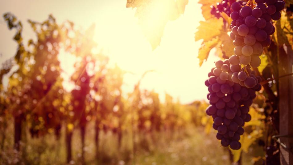 Tagus Vineyards: Tagus Region Wine Tour