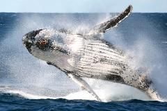 Sydney Express Whale Watching Cruise - Weekdays