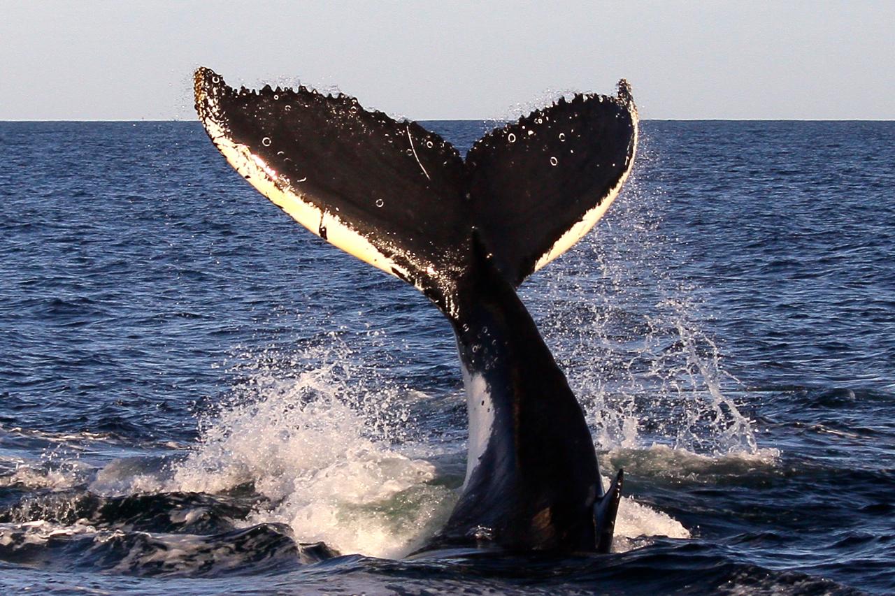Sunset Whale Adventure