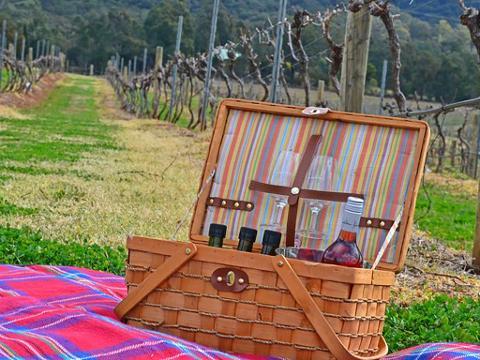 Picnic among the vines
