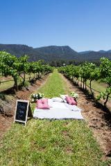 Premium picnic among the vines