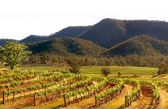 Icons of the Hunter Valley - 3 signature experiences at Audrey Wilkinson, Brokenwood and Tyrrells