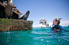 Breakfast or Lunch snorkel with the Seals