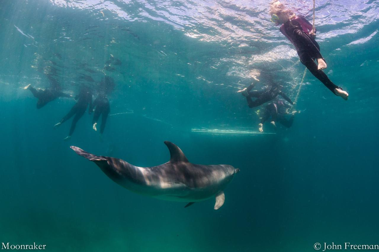 3 hour Dolphin Swim Private experience.