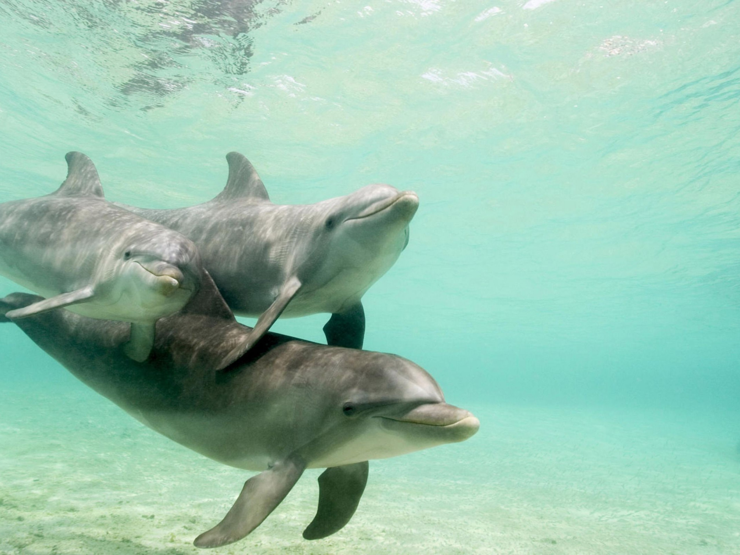 Small group Dolphin & Seal swim - Private charter