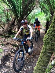 Cradle Mt/Dove River MTB Tour