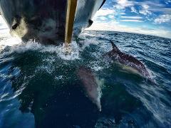 Island & Wildlife Cruise - Full day