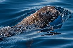 Gift Voucher for Half Day Dolphin and Wildlife Cruise
