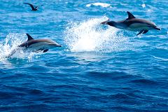 Half Day Dolphin and Wildlife Cruise