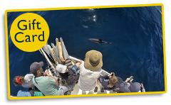 Gift Voucher for Best Day Ever - Full day Island & Wildlife Cruise