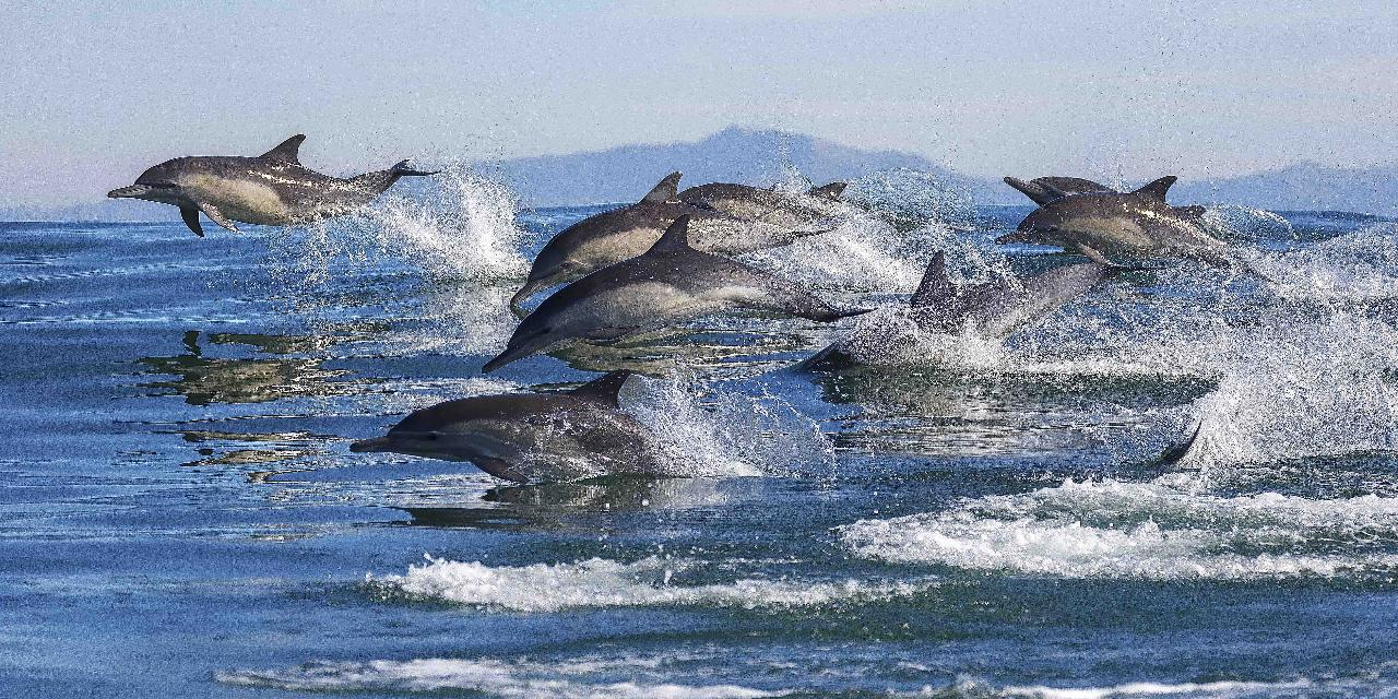 Dolphin & Wildlife Cruise - Half day - Tauranga departure