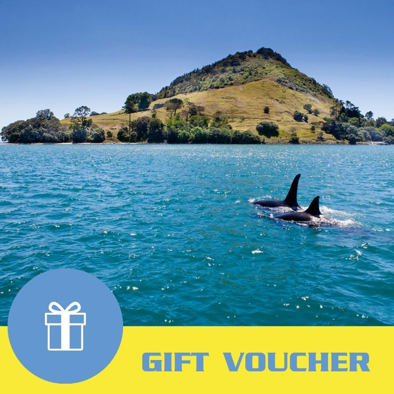 Gift Voucher: One Hour Scenic Harbour Cruise from Mount Maunganui