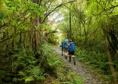 Milford Track 1 Day Guided Walk and Cruise