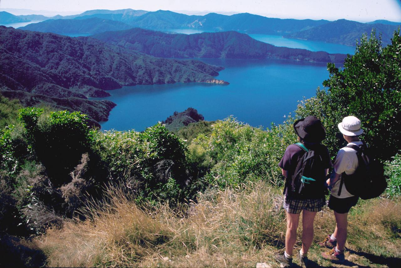 Queen Charlotte Track - 1 Day Guided Walk