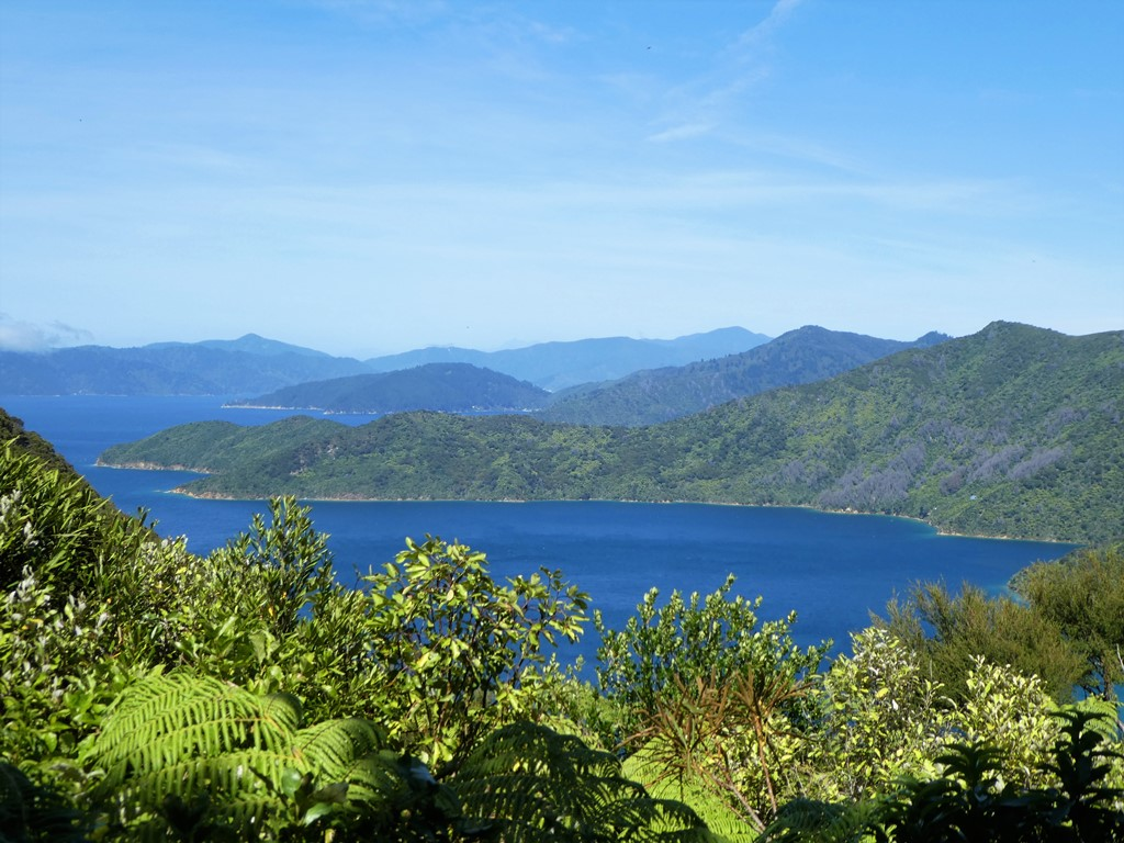 Queen Charlotte Track - 5 Day Upgrade Independent Walk - Furneaux Lodge, Punga Cove, Portage Resort and Lochmara Lodge