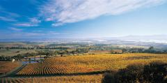 Half Day Yarra Valley Winery Tour (M9)