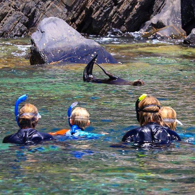 Kangaroo Island Ocean Safari - 2 hour SWIM with dolphin / seal / coastal snorkelling