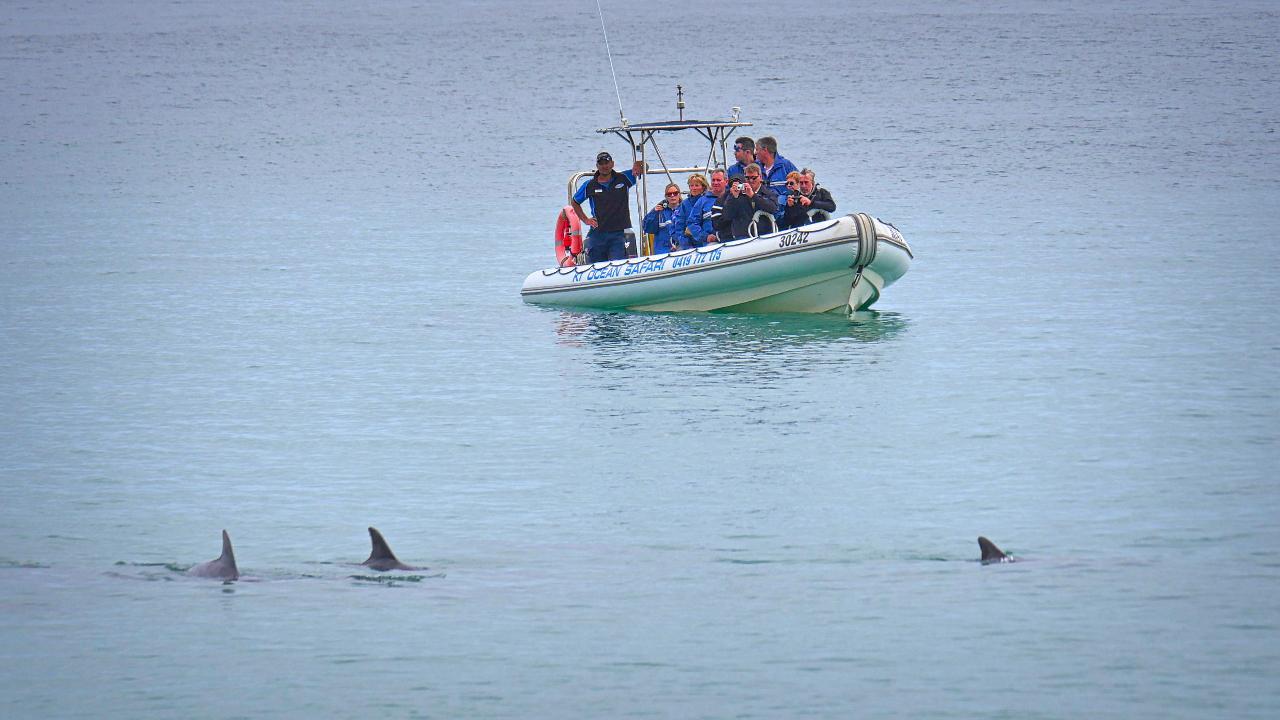 Kangaroo Island Ocean Safari - 2 hour VIEW ONLY (snorkelling safari)