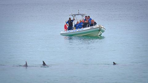 Kangaroo Island Ocean Safari - 2 hour VIEW ONLY (snorkelling safari)