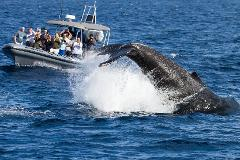 Ultimate Whale Watching Adventure (15 Passengers Max)