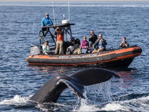 Whale Watching Los Angeles Visitors $13 Special | Davey's Locker