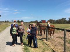 Horses, Wine & Beer Tour