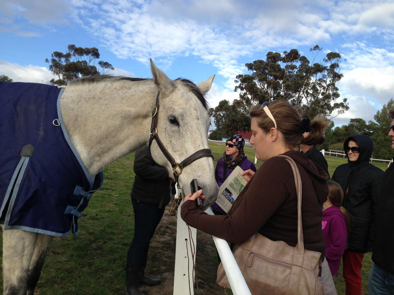 Horses, Beer & Wine Tour with Lunch