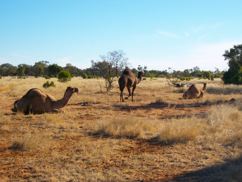 Authentic Outback Adventure Tour