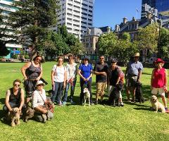 Four Paws & a Heartbeat - Walking Tour with dogs
